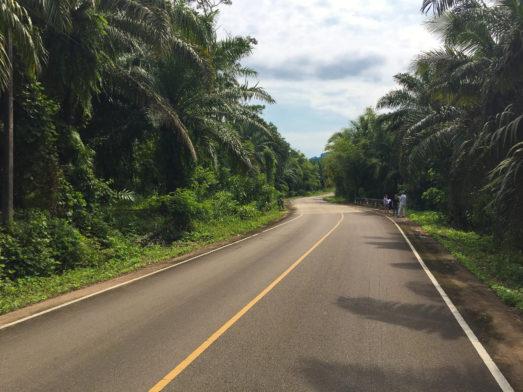 Krabi road in the jungle