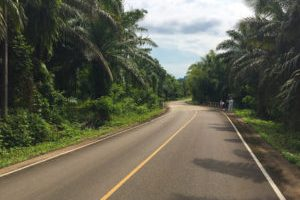 Road in Krabi