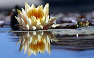 Reflecting On The Benefits of Reflection