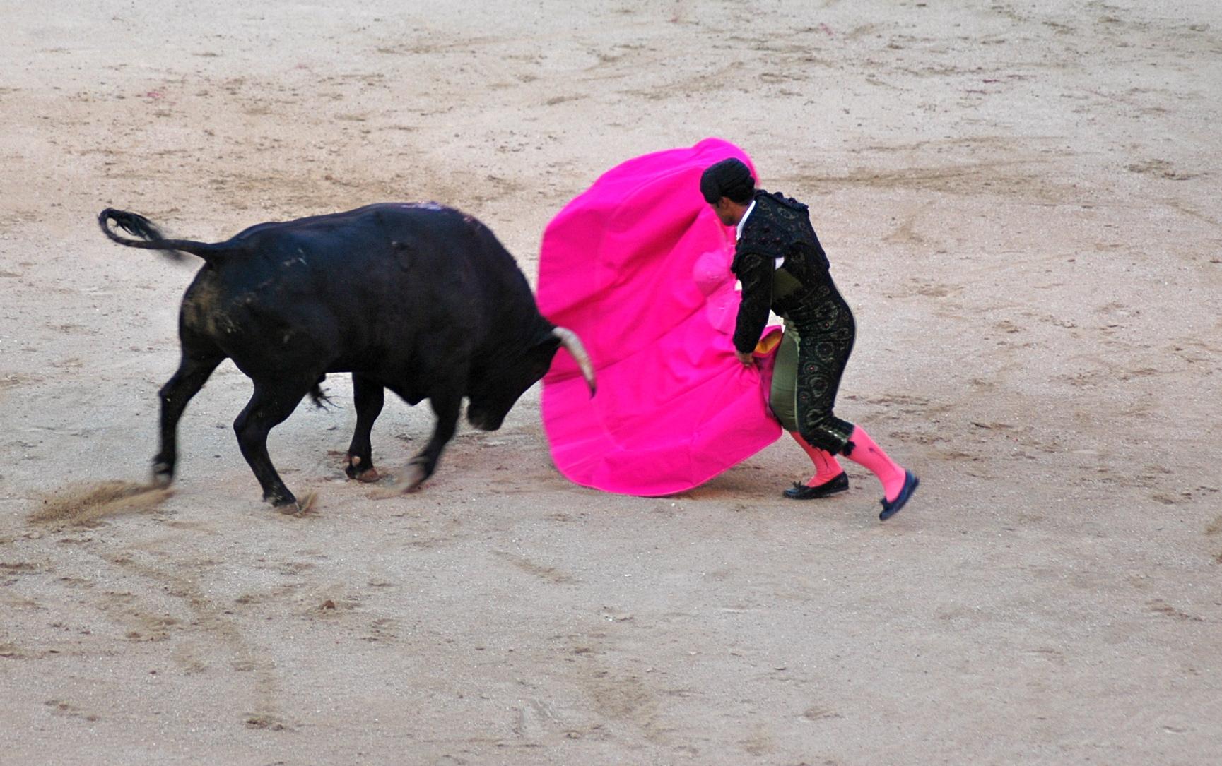 """Resultado de imagem para Os que """"amam"""" muito os touros e os torturam e matam"""