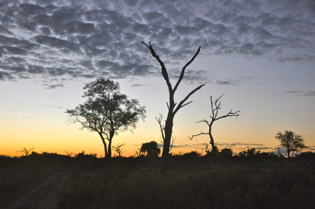 O amanhecer nas savanas da Botswana