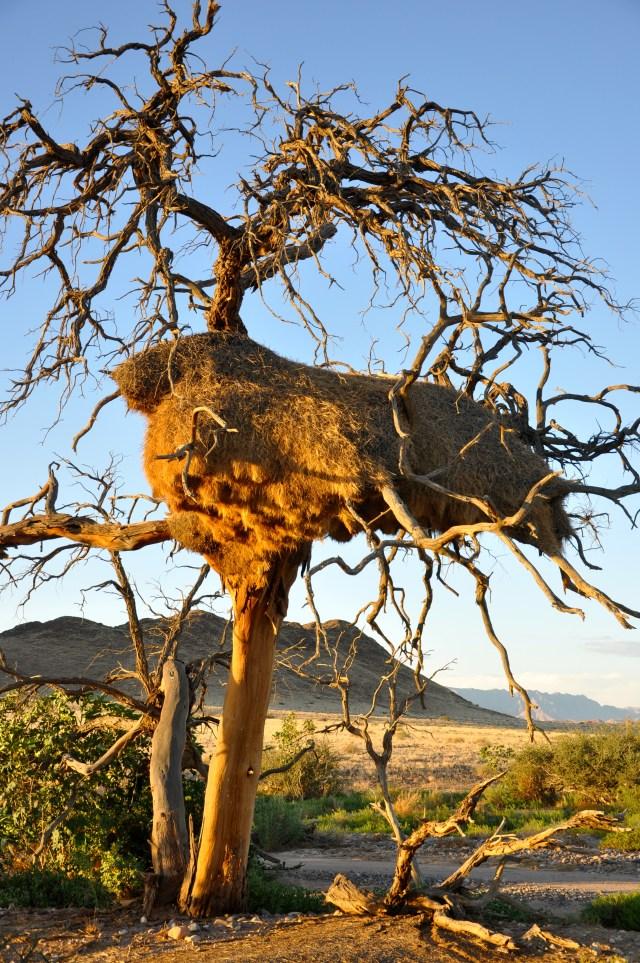 Os ninhos gigantes da Namíbia