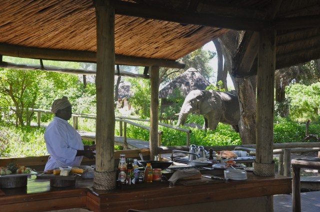 O elefante veio para o almoço.