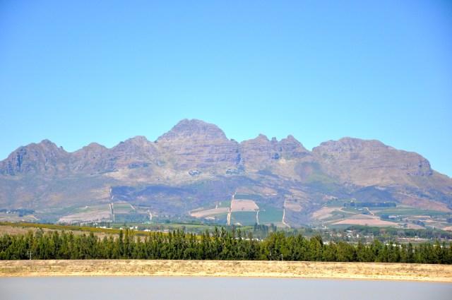Grandes campos de plantação de uvas da África do Sul