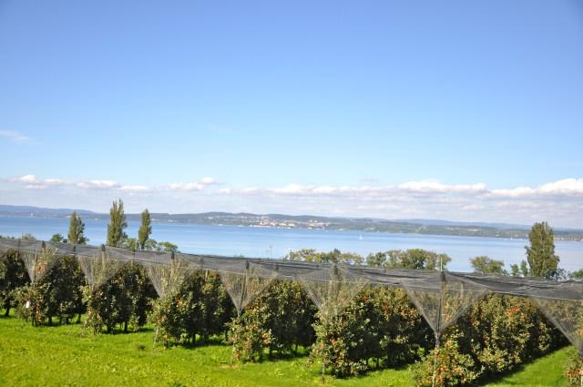 O Lago de Constança e as plantações de maçã.