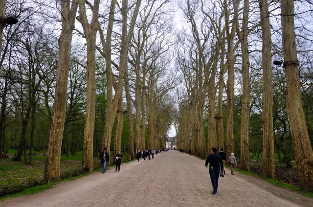 O acesso de plátanos ao Castelo Chenonceau