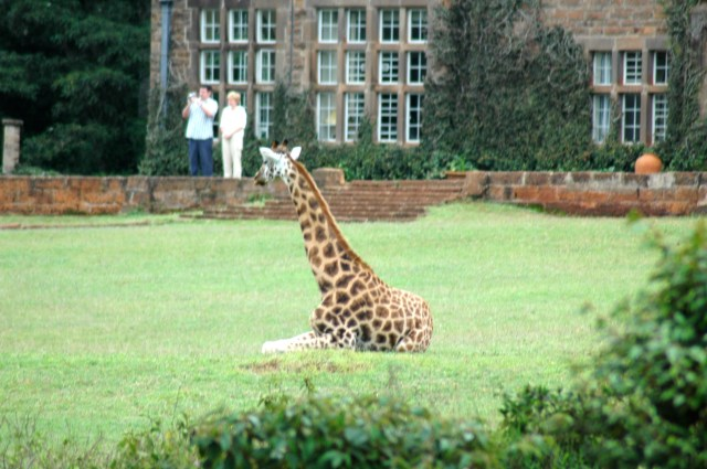 O Giraffe Center de Nairobi.