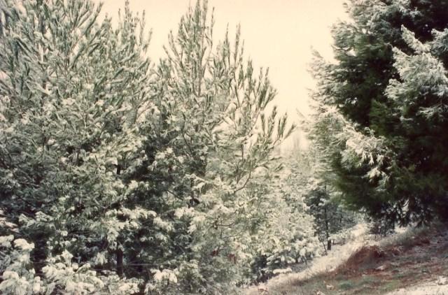 A nevasca cobriu as florestas de neve.
