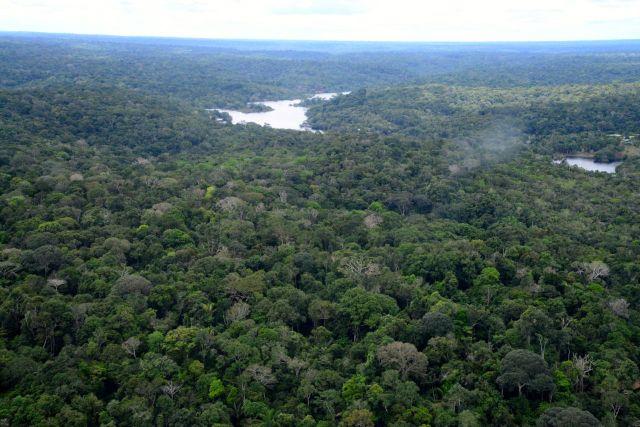 A Floresta Equatorial.