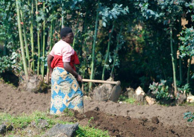 Comunidade agrícola na base da montanha.