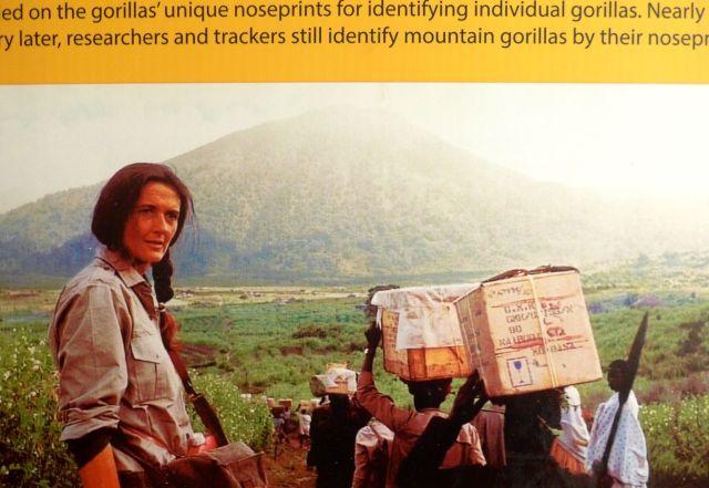 Fotografia de arquivo, no museu localizado na sede do The Dian Fossey Gorilla Fund.