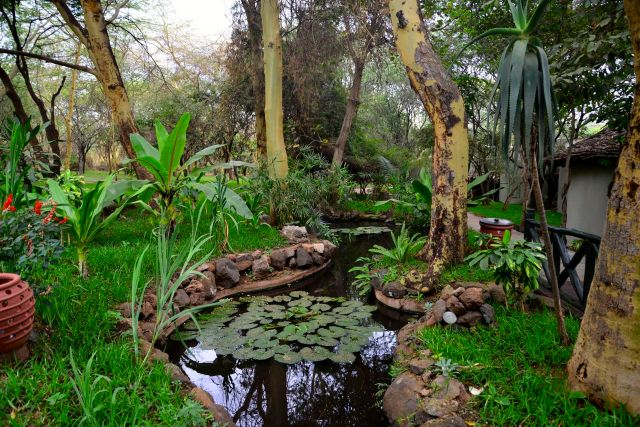 Detalhes dos jardins do Serena Lodge de Lake Manyara