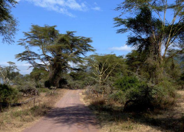 A estrada que circunda a borda da cratera.