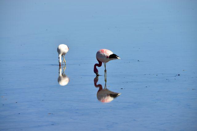 O Flamingo de James