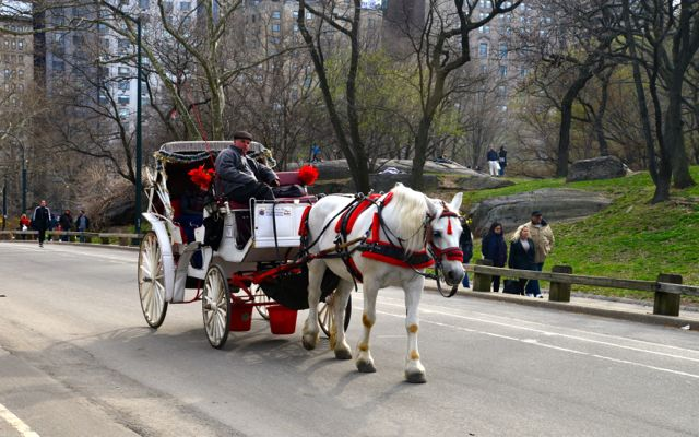Passeio de charrete no Central Park.