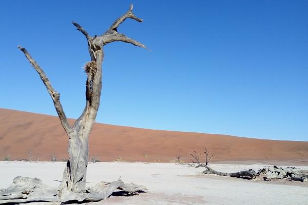 Deadvlei - Deserto da Namíbia - UmTour