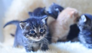 A photo of kittens by julochka on Flickr