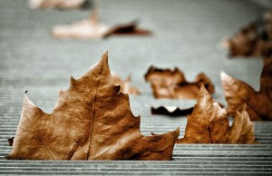 A photo of brown leaves by Philippe Gillotte on Flickr