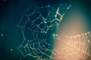 A photo of a spider web by chivosol on Pexels