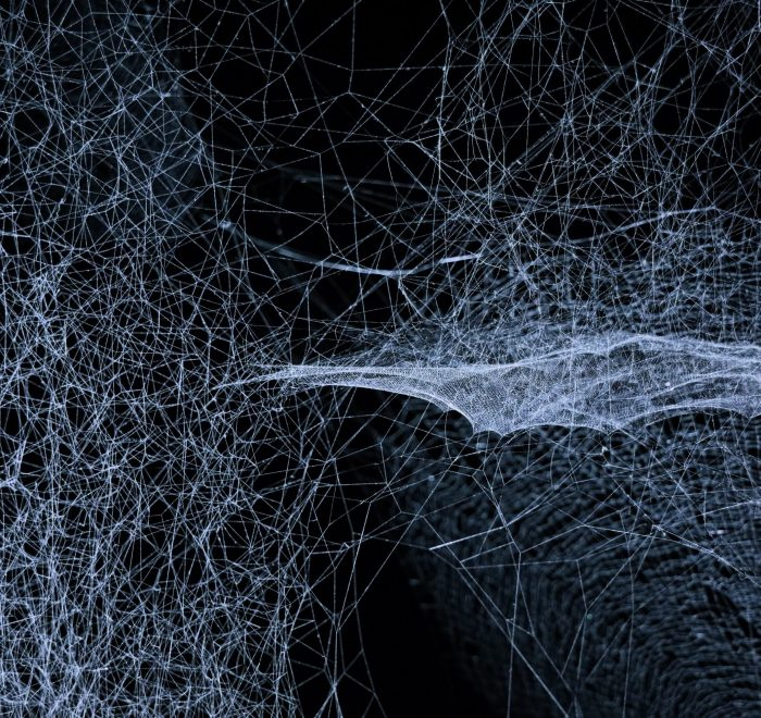 A photo of spider webs at night by Jingyi Wang on Unsplash