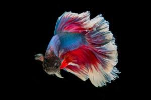 Un poisson dans l'eau