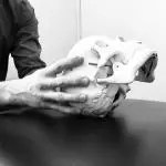 Osteopathy-Cranial
