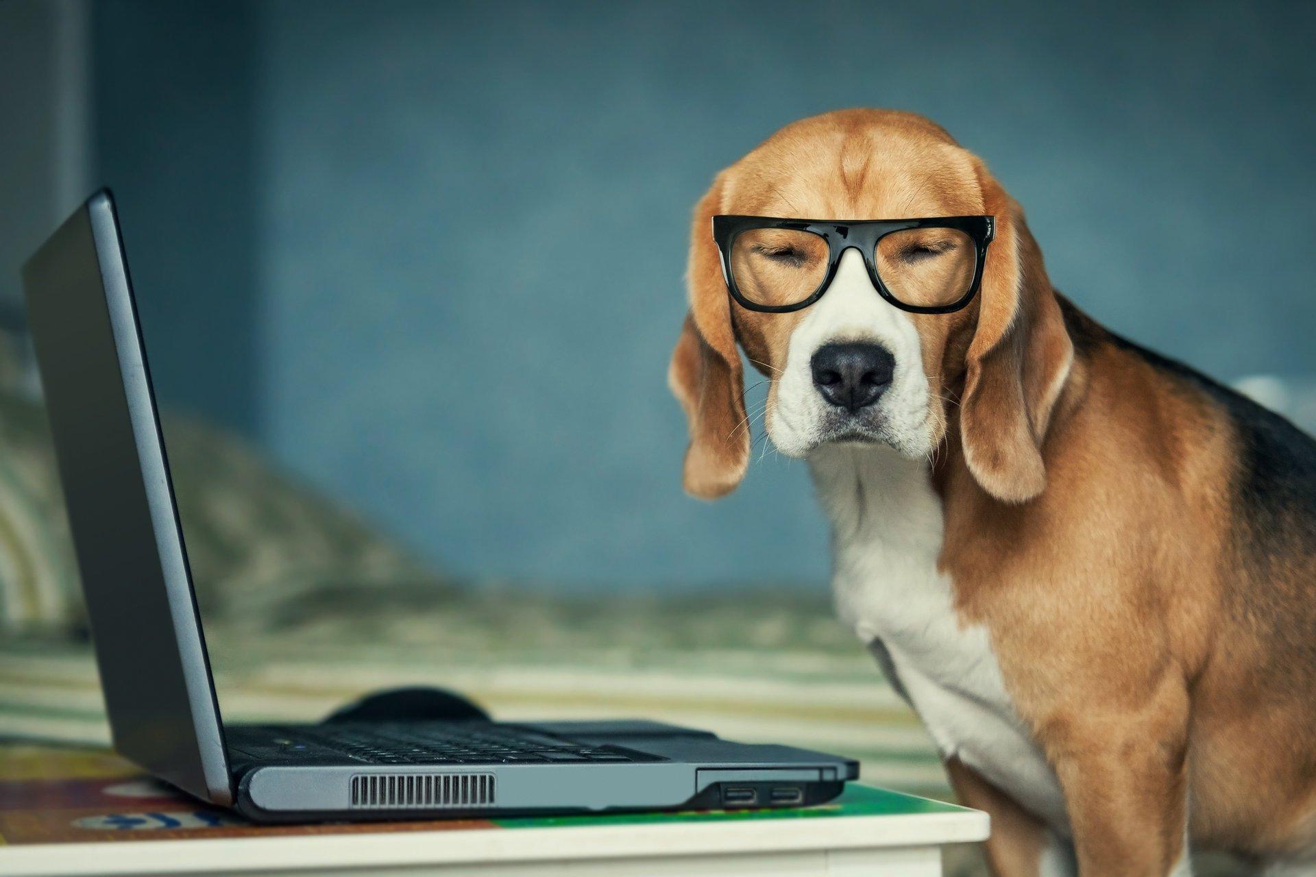 На пороге нового открытия: финские ученые создают интернет для собак 1