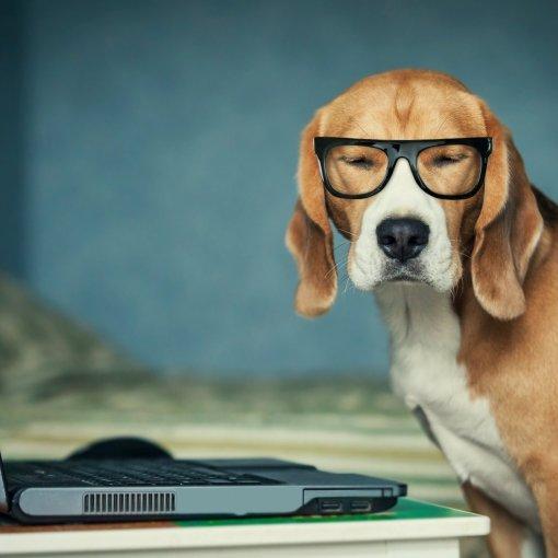 На пороге нового открытия: финские ученые создают интернет для собак 5