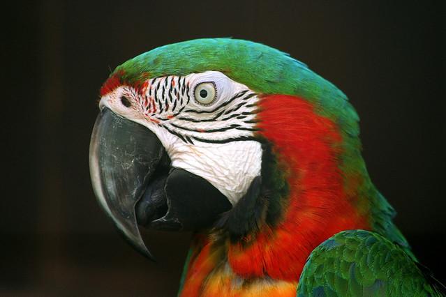 Попугаи рассуждают сложным методом исключения 1