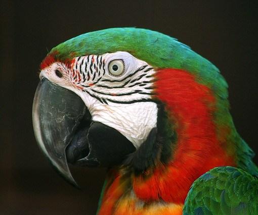 Попугаи рассуждают сложным методом исключения 11