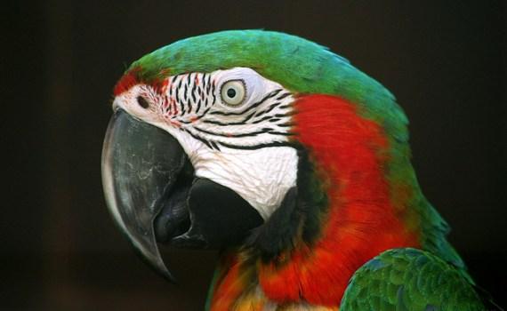 Попугаи рассуждают сложным методом исключения 12