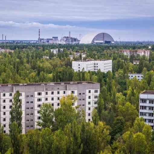 Как растительность сумела выжить в Чернобыле? 7
