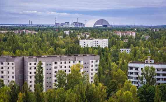 Как растительность сумела выжить в Чернобыле? 6
