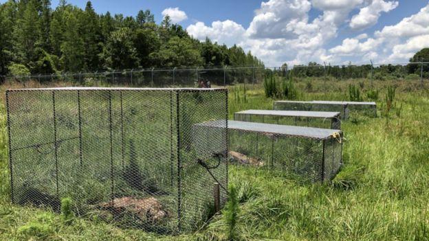 Что такое ферма трупов и зачем она нужна науке 4