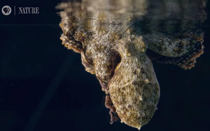 Что снится осьминогам? Мы не знаем — но со стороны выглядит завораживающе 1