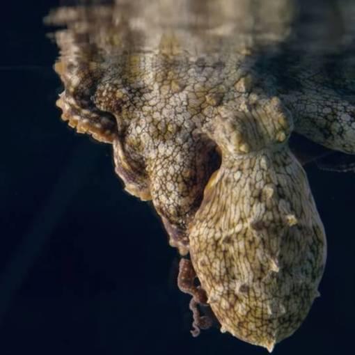 Что снится осьминогам? Мы не знаем — но со стороны выглядит завораживающе 9