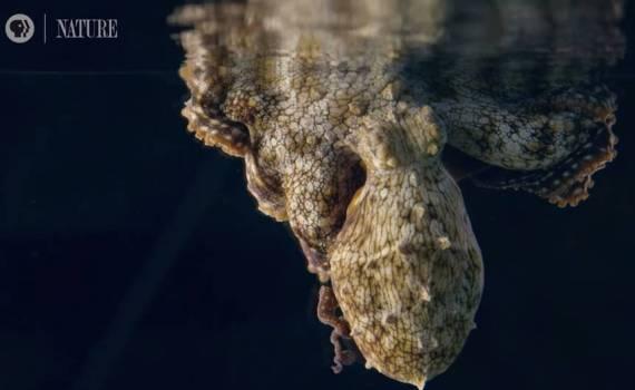 Что снится осьминогам? Мы не знаем — но со стороны выглядит завораживающе 10