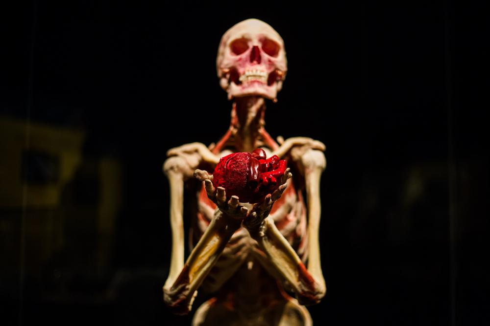 Выставка пластинированных человеческих тел в Киеве 6