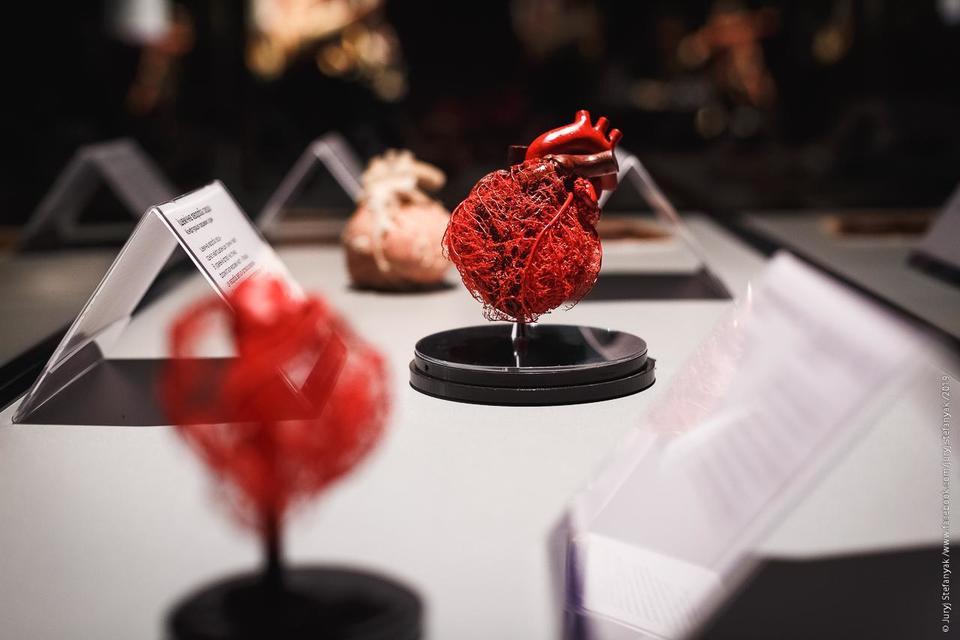 Выставка пластинированных человеческих тел в Киеве 13