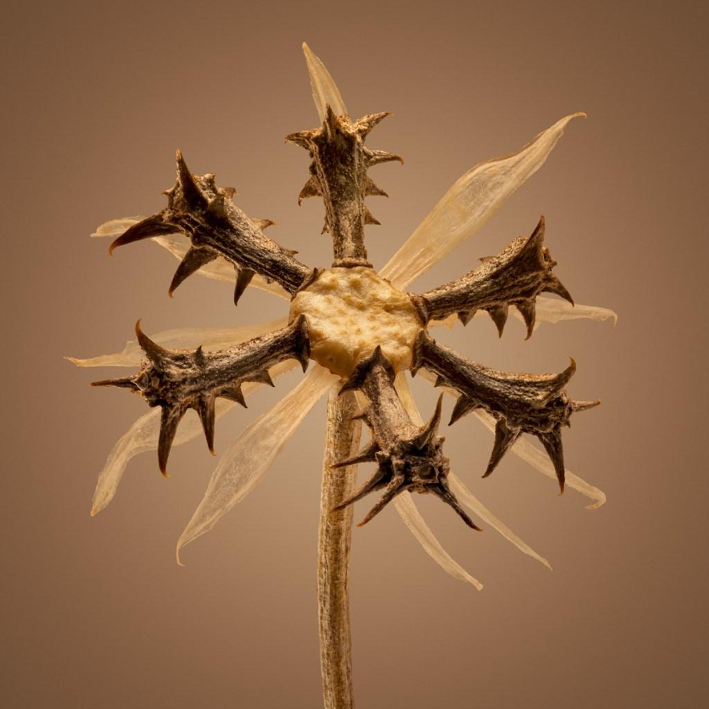 Удивительные детали экзотических семян под микроскопом 8