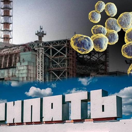 Грибок из Чернобыля может помочь человечеству колонизировать Марс? 7