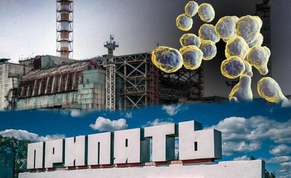 Грибок из Чернобыля может помочь человечеству колонизировать Марс? 1