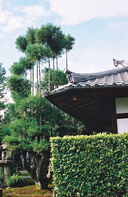 Экологам на вооружение. Японские кедры китаяма в технике 14 века 3
