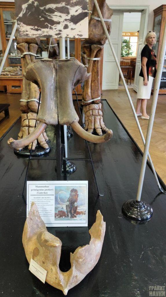 Палеонтологическая гордость Одессы. Фоторепортаж 60