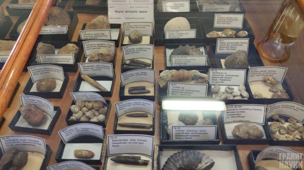 Палеонтологическая гордость Одессы. Фоторепортаж 37