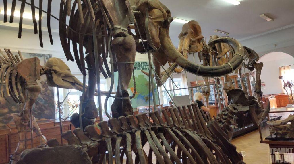 Палеонтологическая гордость Одессы. Фоторепортаж 33