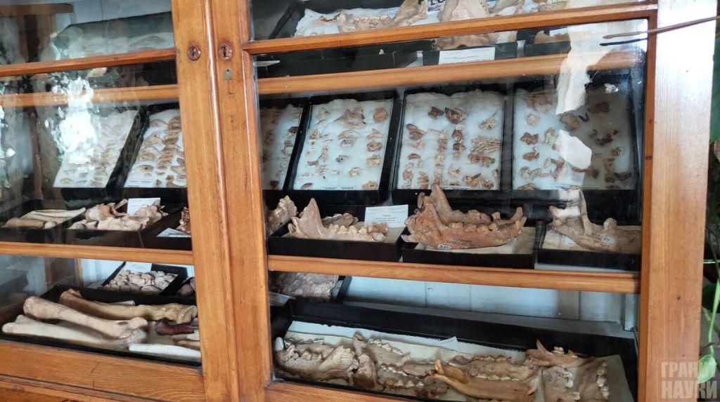 Палеонтологическая гордость Одессы. Фоторепортаж 27
