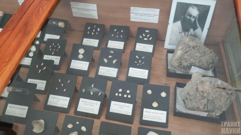 Палеонтологическая гордость Одессы. Фоторепортаж 13