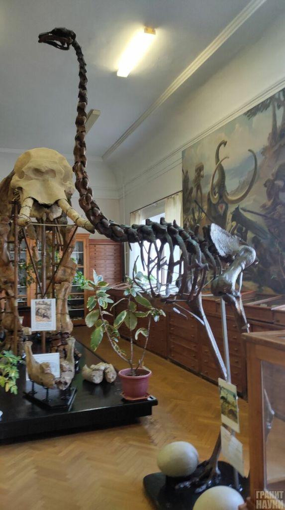 Палеонтологическая гордость Одессы. Фоторепортаж 51