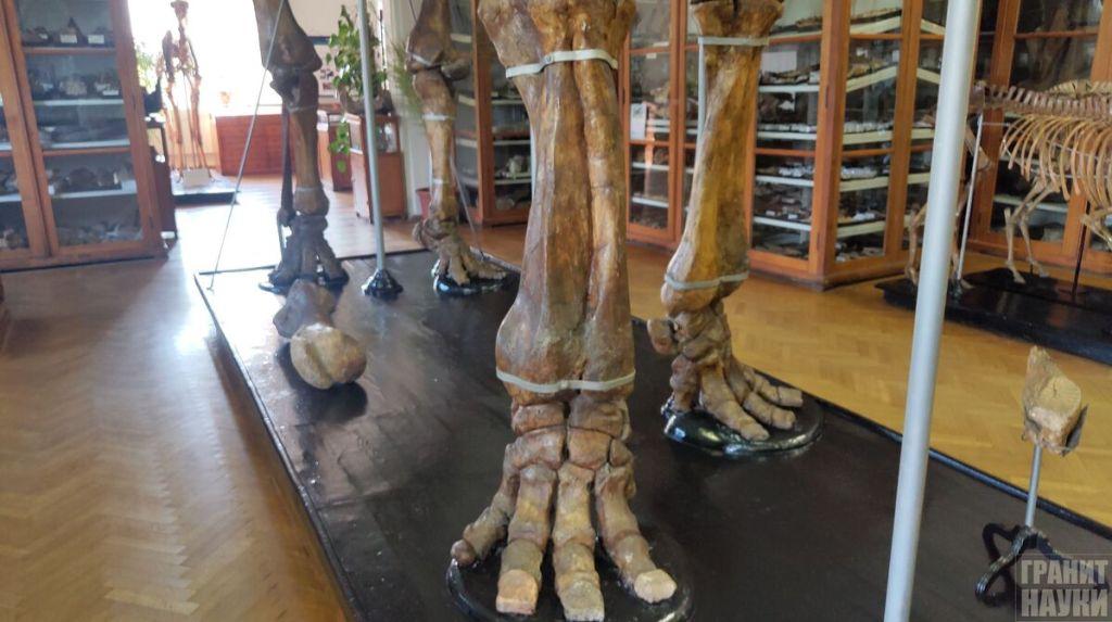 Палеонтологическая гордость Одессы. Фоторепортаж 15